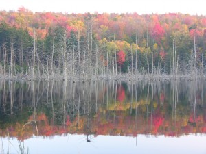 Fall colors on beaver pond off road 10.